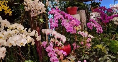 La Nación / Orquídeas Yacht: invitan a los últimos días de la feria de productores de Caacupé
