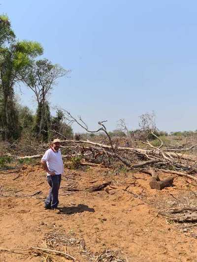 Concepción: Fiscalía de Medio Ambiente intervino en supuesta tala indiscriminada