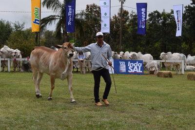 Admisión: destacan adaptación, precocidad y capacidad de producción del ganado paraguayo