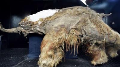 "Buscan resucitar mamuts para ""sanar"" la Tierra"