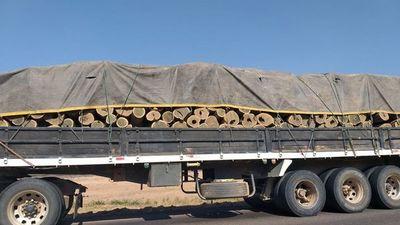 Palo santo, el árbol emblema desprotegido del Chaco