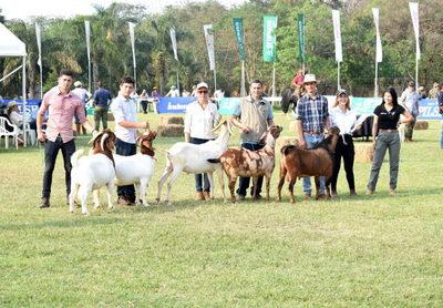 Cabras exhibirán su mejora genética y criadores esperan buenos negocios