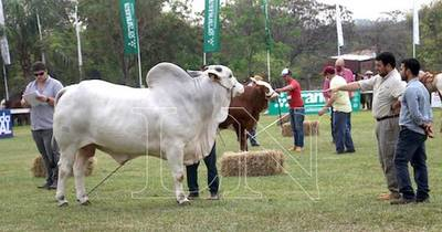 La Nación / La ganadería pegó un salto cualitativo en los últimos 20 años
