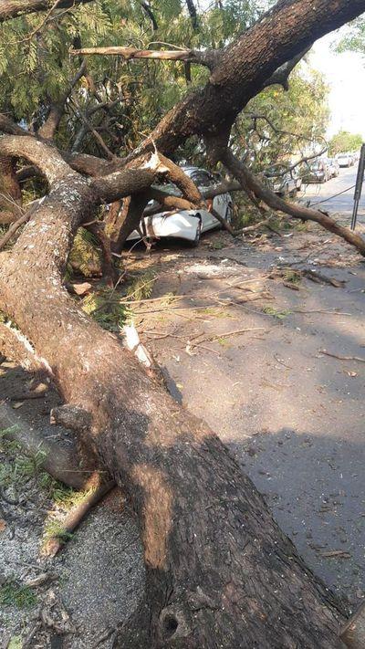 Dos vehículos y una casa dañados por caída de un árbol en Asunción