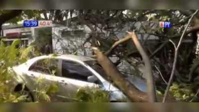 Enorme árbol cayó sobre dos autos y dejó a barrio sin luz