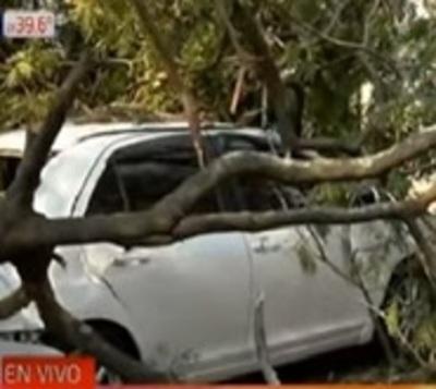 Frondoso árbol cae y causa destrozos