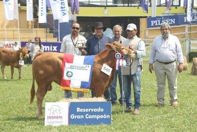 Crónica / Expo ganadera: arrancó juzgamiento de animales