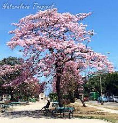 El inicio de la primavera y Día de la Juventud con clima fresco y lluvias