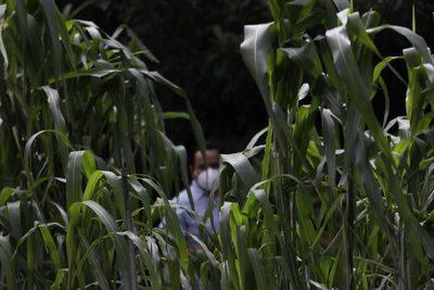 México renovará 34 sistemas producto agrícolas con apoyo del IICA