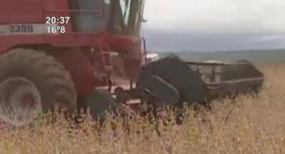 Economía en destaque: Soja genera 2.338 millones de USD en ingresos