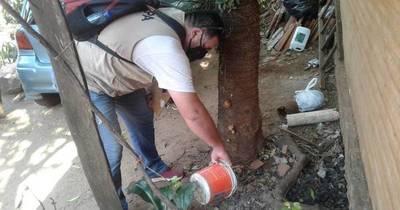 La Nación / Concepción notificó 36 casos sospechosos de dengue, pero aún no hay confirmados