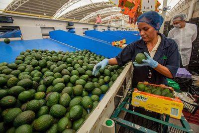 El superávit agroalimentario de México cae un 38,8 % entre enero y julio