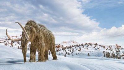 Cambio climático: los científicos que quieren «resucitar» mamuts para salvar el planeta