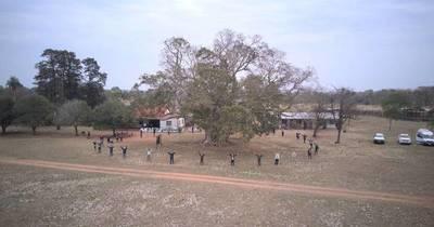 La Nación / Seis imponentes árboles se consagran como Colosos de la Tierra en suelo guaraní