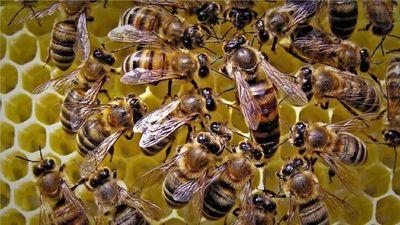 Un hombre muere tras ser atacado por un enjambre de abejas
