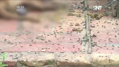 Ataques de abejas en Luque: Murieron 5 perros