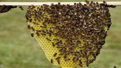 Concepción: Un hombre murió tras ser atacado por un enjambre de abejas