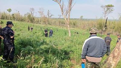 Sidepar 3000; Destruyen 10 hectáreas de marihuana – Prensa 5