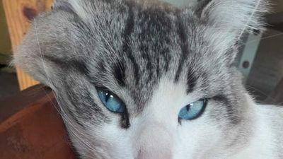 Gatito murió por negligencia en veterinaria, denuncian