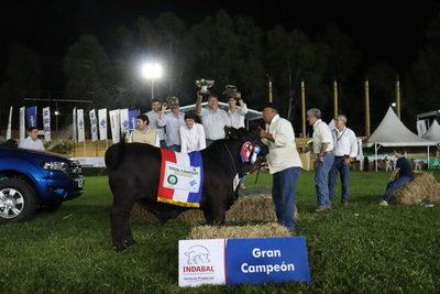 Ganadera Arandu dominó en la pista Brangus con el Gran Campeón en machos y hembras