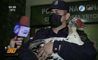 """""""Pato"""" recupera pato robado y dos sujetos son detenidos"""
