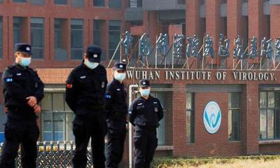 Nuevos documentos revelaron que el laboratorio de Wuhan planeaba mejorar los virus de los murciélagos para estudiar los riesgos en los humanos – Prensa 5