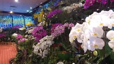 Feria de orquídeas es hasta este viernes
