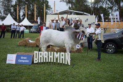 PAHSA logró el Gran Campéon Brahman y Neuland el Reservado