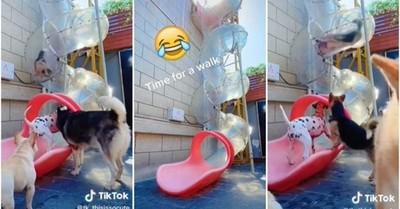 El adorable video de unos perros deslizándose por un tobogán que es furor en TikTok