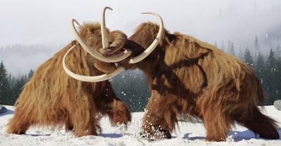 Colossal: empresa estadounidense de genética se puso como meta resucitar al mamut