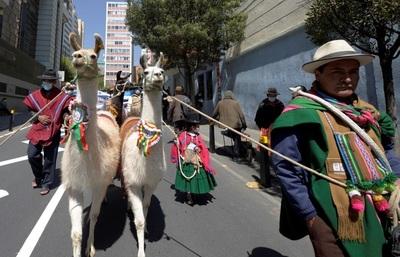 Un desfile de llamas en La Paz exhibe el potencial económico de los camélidos