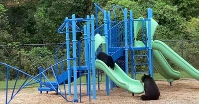El tierno juego de una osa y su cachorro en el parque de una escuela