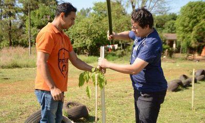 Municipalidad de Ciudad del Este llega a la meta de plantar 5000 árboles en sitios públicos – Diario TNPRESS