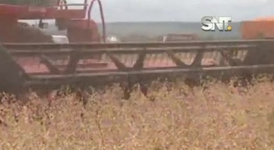 Segmento Económico: Rubro agroindustrial registra mayor caída en 9 años