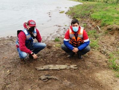 Preocupa mortalidad de peces en Ayolas