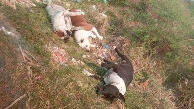 Encuentran muertos a tres perros de la raza pitbull