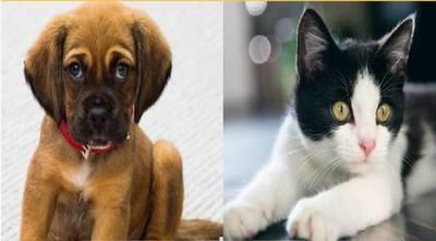 Realizarán jornada de vacunación antirrábica gratuita para perros y gatos