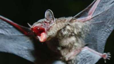 Un hombre muere de rabia tras despertar con un murciélago en su cuello en EEUU