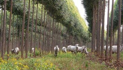Forestal Sylvis es reconocida por sus buenas prácticas de reforestación con sistema silvopastoril