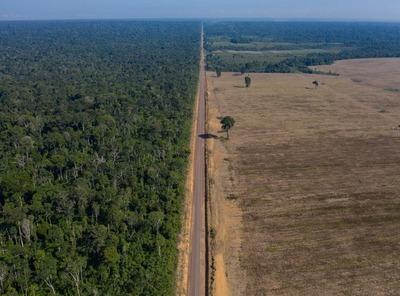 La Amazonía perdió un área equivalente a Chile en un plazo de 36 años