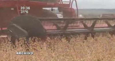 Economía: Exportación de harina de soja genera ingresos por 455 millones de USD