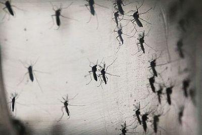 Mosquitos en EEUU dieron positivo en el test de EEE, un virus potencialmente mortal