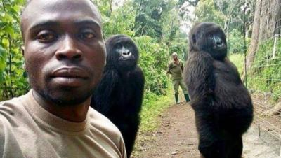 La gorila que amaba las selfies, murió en brazos de su cuidador