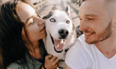 Ley considerará a las mascotas como hijos en caso de divorcio en España