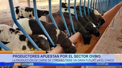Productores apuestan a la producción de carve ovina