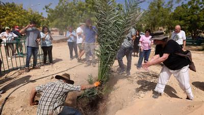 Plantan semillas de más de 2.000 años de antigüedad y te sorprenderás con el resultado