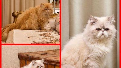 """Muchos quisieron adoptar a los """"narco-gatitos"""" fifí"""