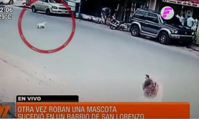 ¡Otra vez robaron una mascota!