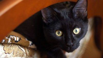 Decapitaron a gatitos en posible ritual satánico