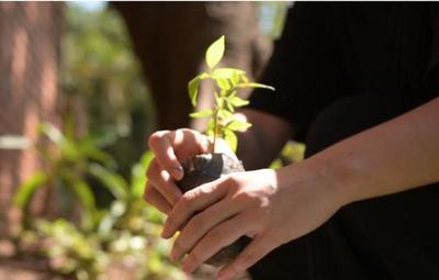Campaña de concienciación ambiental cerró con entrega de mil plantines